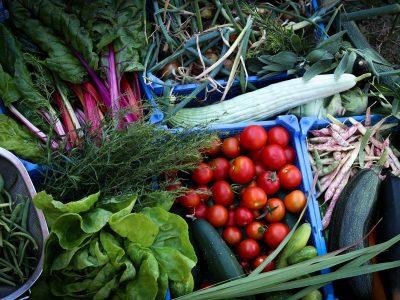 Gemüse von unseren Selbstversorger Hof