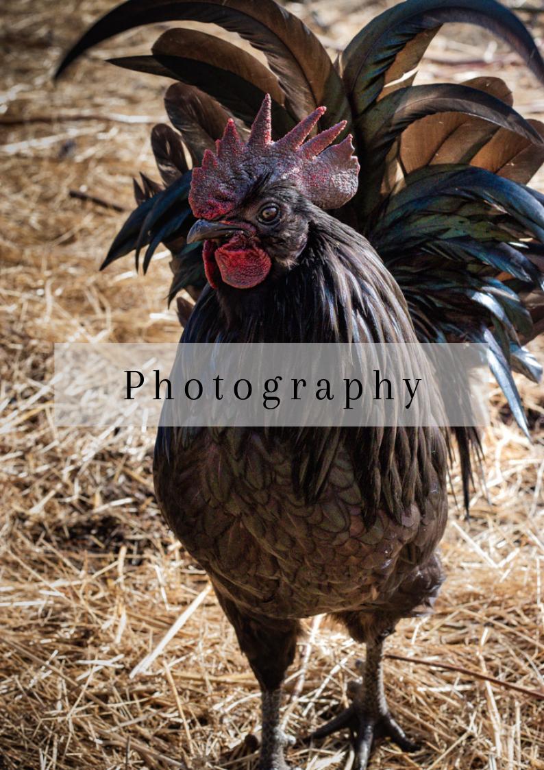 Fotos von der Biotopica Farm